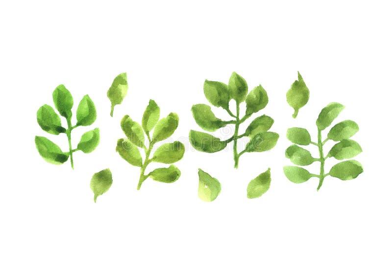 Waterverf groene bladeren geïsoleerde reeks royalty-vrije stock foto's