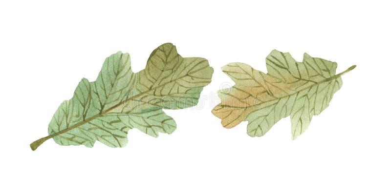 Waterverf groene eiken bladeren met gestreept vector illustratie