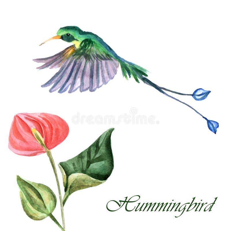 Waterverf hammingbird met bloem op een witte achtergrond wordt geïsoleerd die royalty-vrije illustratie
