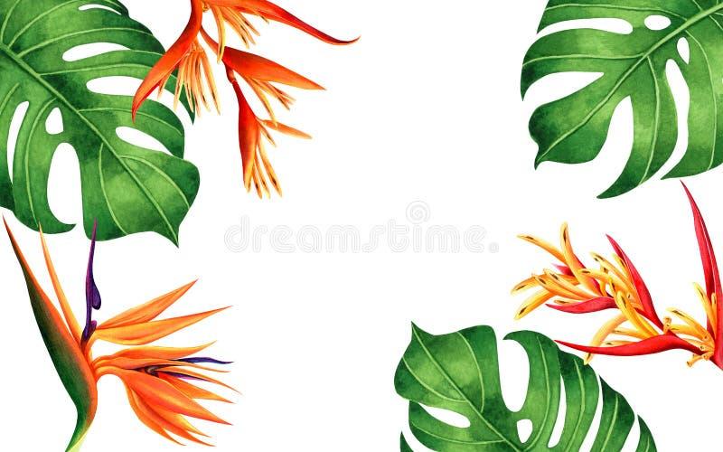 Waterverf het schilderen monstera, groen verlof die, paradijsvogel bloeit achtergrond bloeien Tropische waterverfhand getrokken i royalty-vrije illustratie