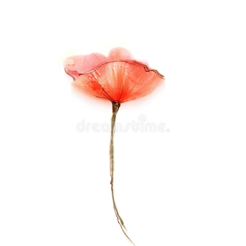 Waterverf het schilderen papaverbloem Geïsoleerde bloemen op Witboekachtergrond royalty-vrije stock foto