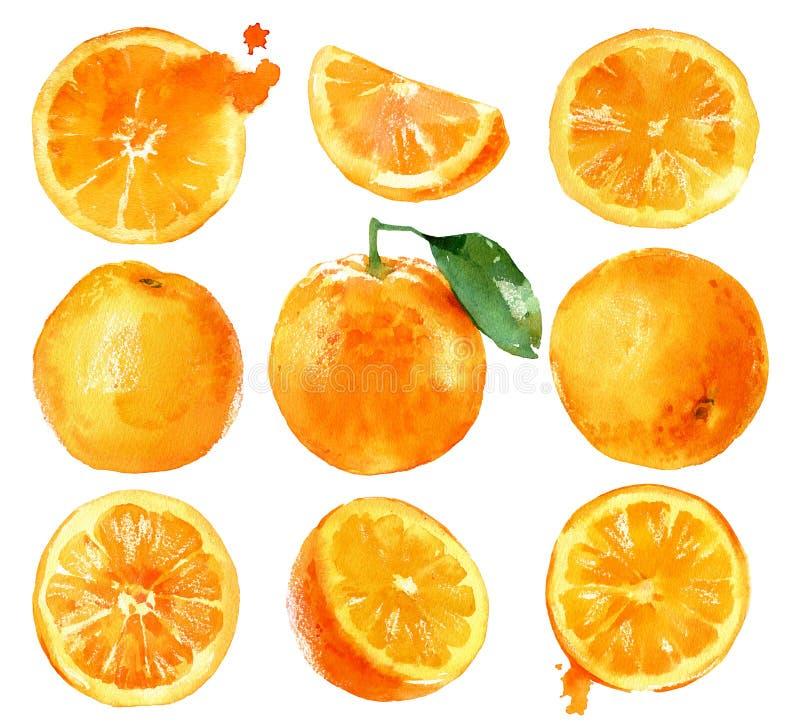 Waterverf het schilderen sinaasappelen royalty-vrije stock afbeeldingen