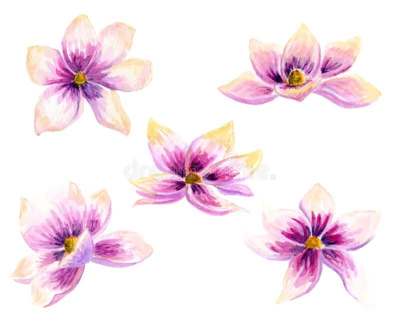 Waterverf het Schilderen van het de bloembehang van de Magnoliabloesem de decoratieart. De hand getrokken geïsoleerde bloemenillu vector illustratie