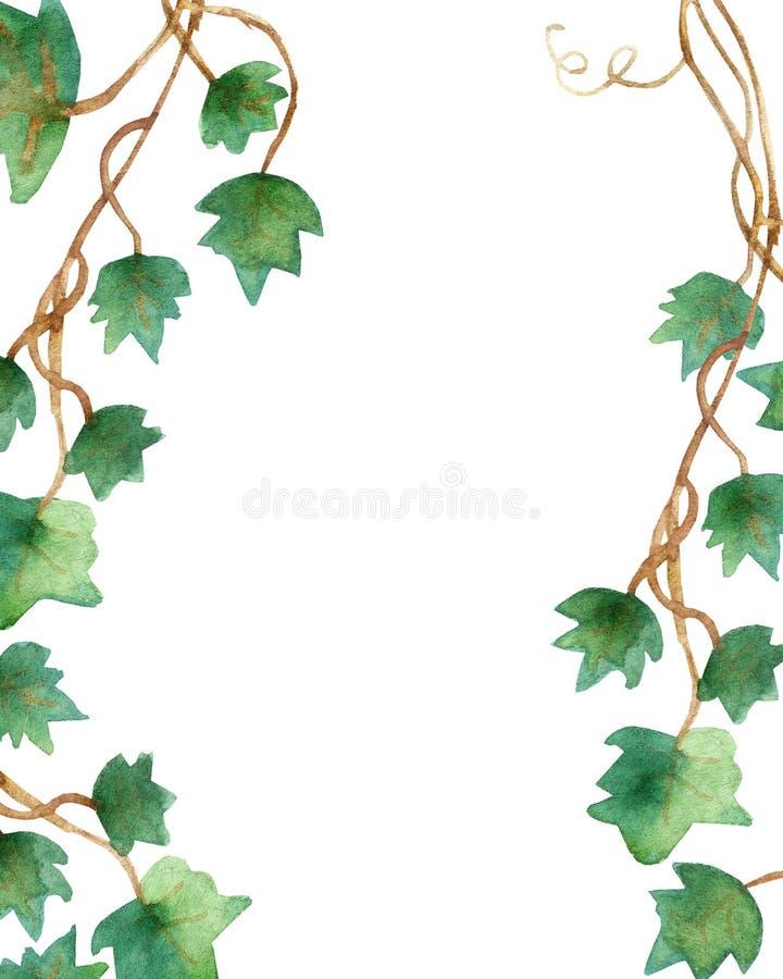 Waterverf het schilderen van groene die klimopbladeren op een witte achtergrond worden geïsoleerd Waterverfhand geschilderde illu royalty-vrije illustratie