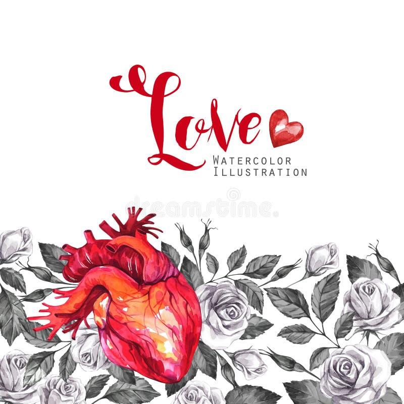 Waterverf horizontaal kader, anatomisch hart met schetsen van rozen en bladeren in uitstekende middeleeuwse stijl Rood nam toe royalty-vrije illustratie