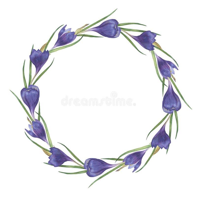 Waterverf kleurrijk met de hand gemaakt rond kader met krokusbloemen stock fotografie