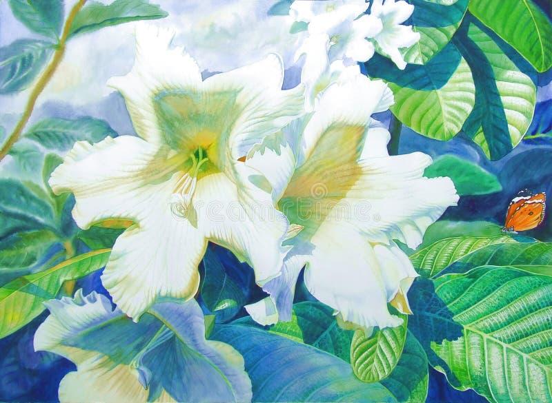 Waterverf kondigt de originele realistische het schilderen witte kleur van trompetbloem aan stock illustratie