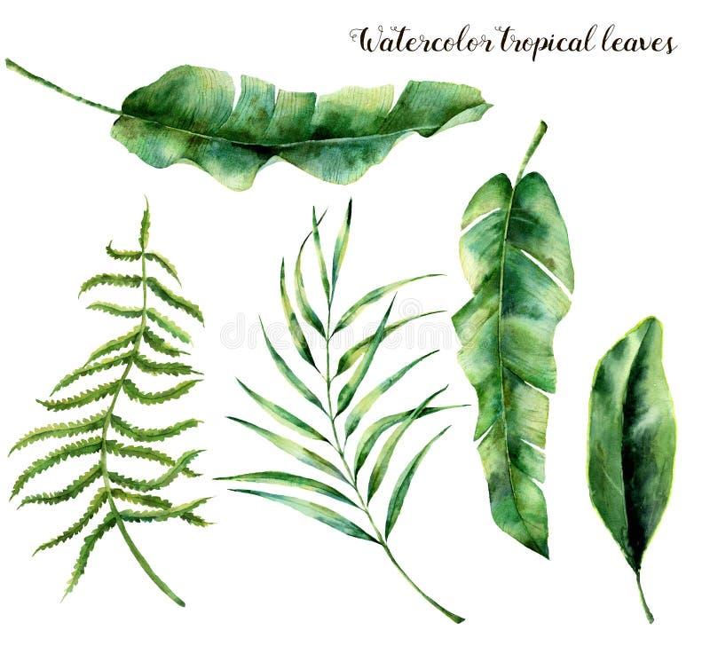 Waterverf met tropische bladeren wordt geplaatst dat Hand geschilderde palmtak, varen en blad van magnolia Tropische die installa stock illustratie