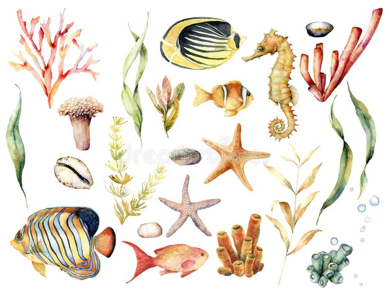 Waterverf met tropische vissen en koraalrifinstallaties die wordt geplaatst Geschilderde hand butterflyfish, zeeëngel, seahorse e stock illustratie