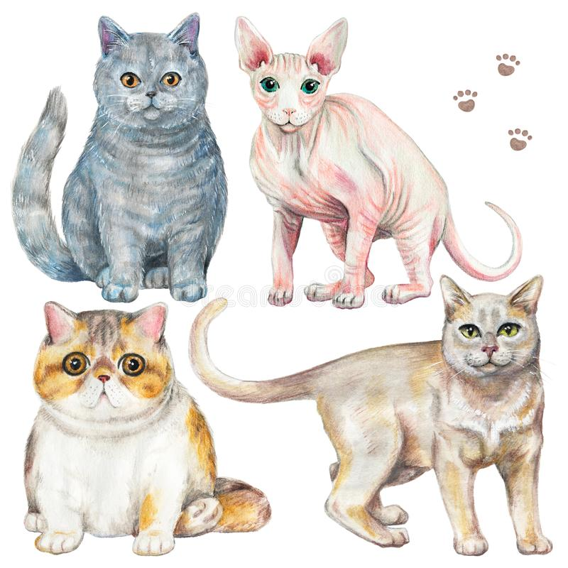 Waterverf met vier verschillende rassen van katten wordt geplaatst die vector illustratie
