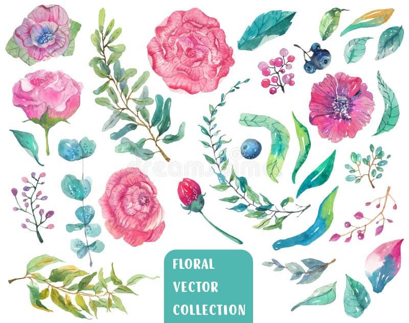 Waterverf mooie bloemeninzameling royalty-vrije illustratie