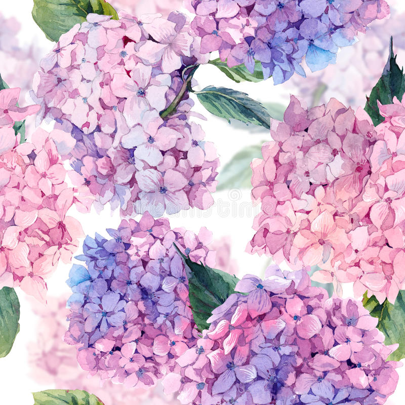 Waterverf naadloos patroon met Hydrangea hortensia royalty-vrije illustratie