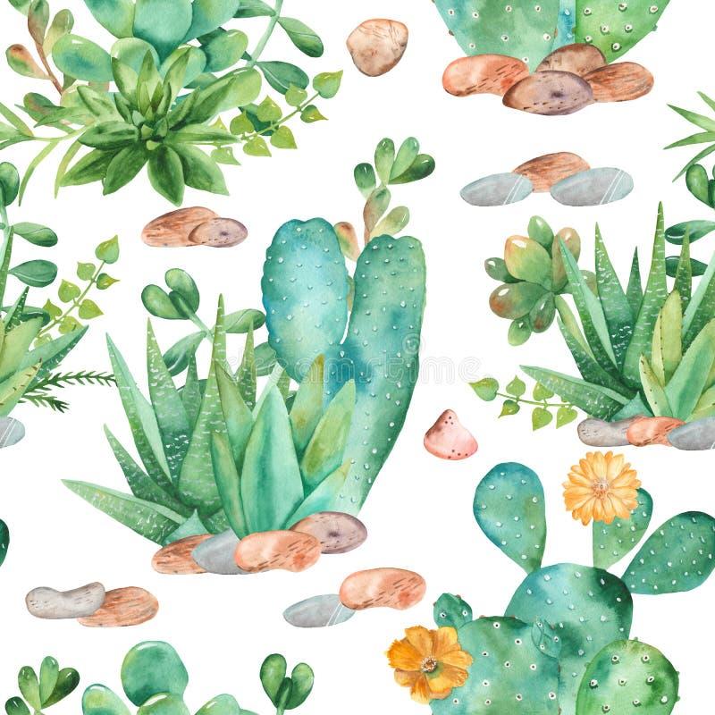 Waterverf naadloos patroon met samenstellingen van succulents, bloemen stock illustratie