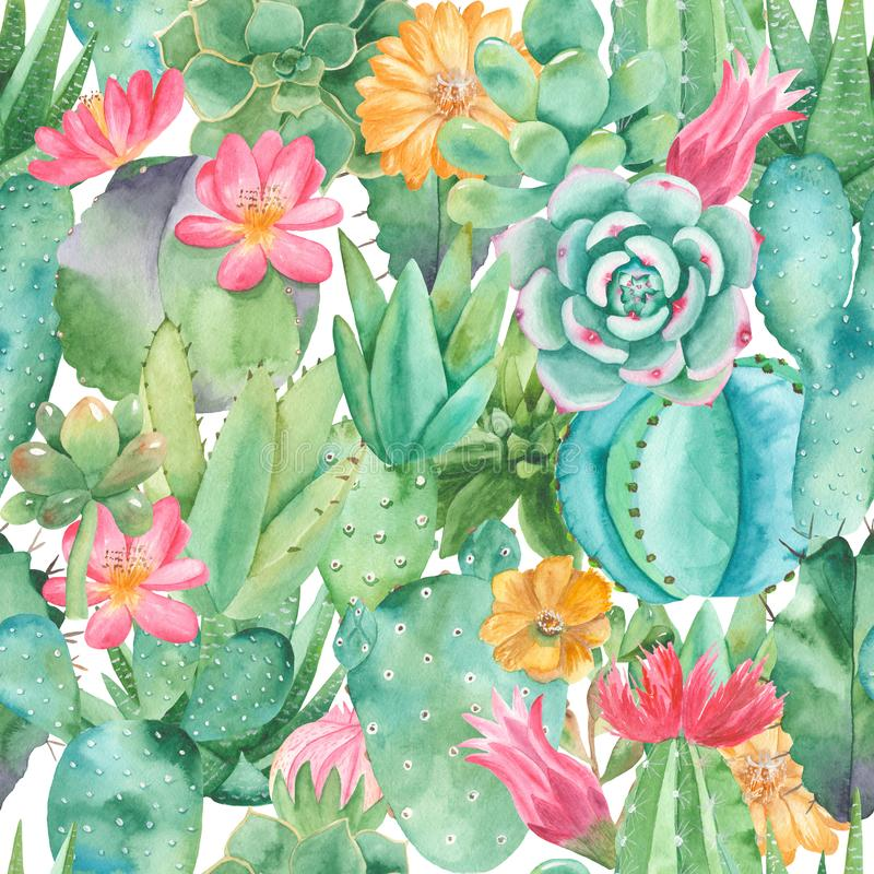 Waterverf naadloos patroon met samenstellingen van succulents, bloemen vector illustratie