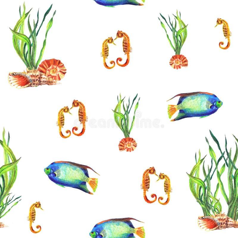 Waterverf naadloos patroon van waterplant, shells, Zeepaardje, Pomacanthus stock illustratie