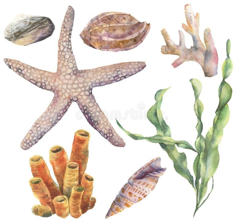 Waterverf onderwaterreeks De hand schilderde laminaria, koralen, zeester, overzeese die kiezelsteen en zeeschelpen op wit wordt g royalty-vrije illustratie