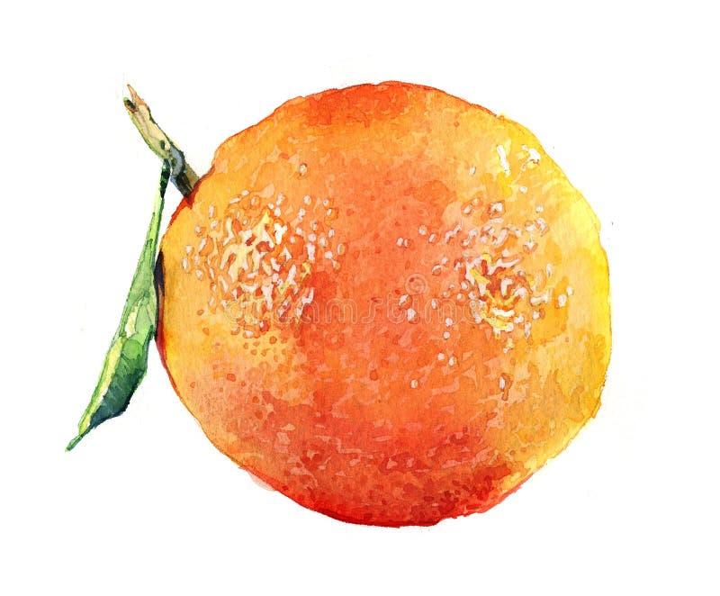 Waterverf oranje en gesneden oranje die fruit op een wit wordt geïsoleerd royalty-vrije illustratie
