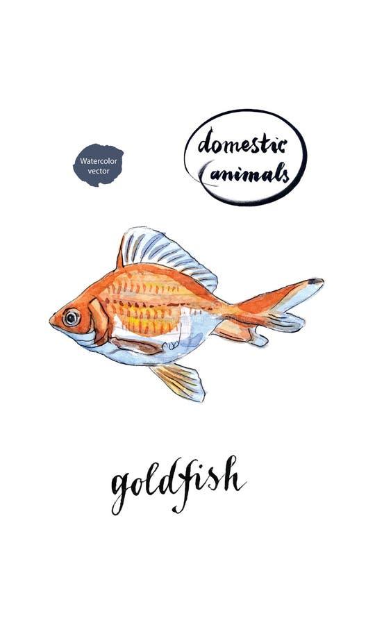 Waterverf oranje goudvis vector illustratie
