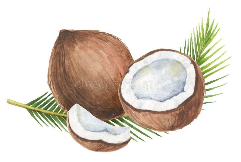 Waterverf organische die samenstelling van kokosnoot en palmen op witte achtergrond wordt geïsoleerd vector illustratie