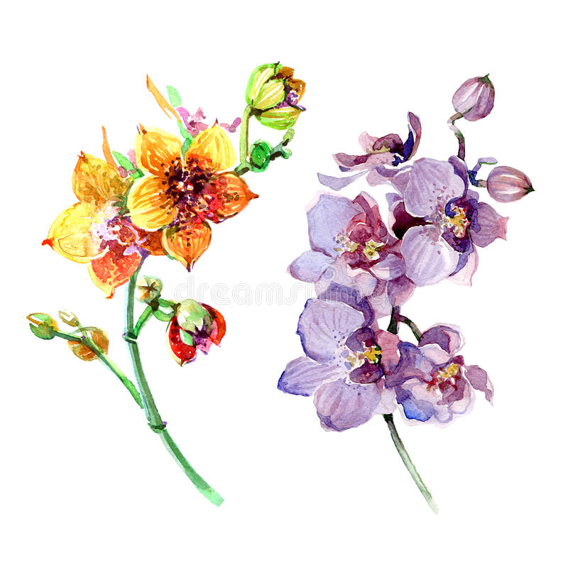 Waterverf roze en oranje orchidee royalty-vrije illustratie