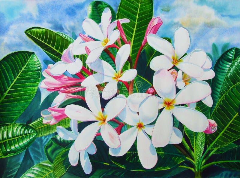 Waterverf schilderen origineel op document kleurrijk van witte plumeriabloemen vector illustratie