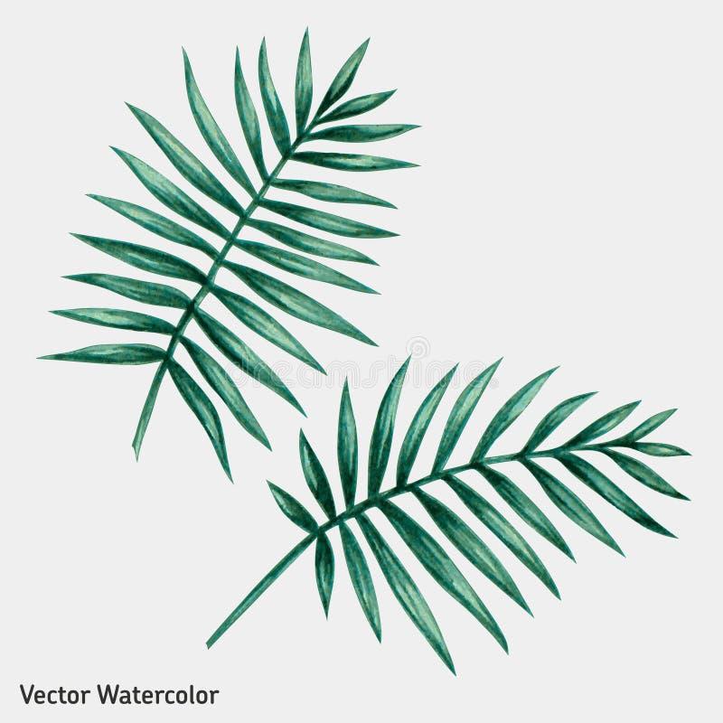 Waterverf tropische palmbladen royalty-vrije illustratie