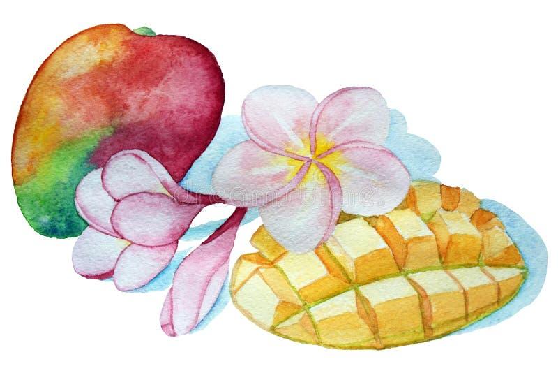 Waterverf tropische samenstelling Gehele en gesneden van mangofruit en plumeria bloemen stock illustratie