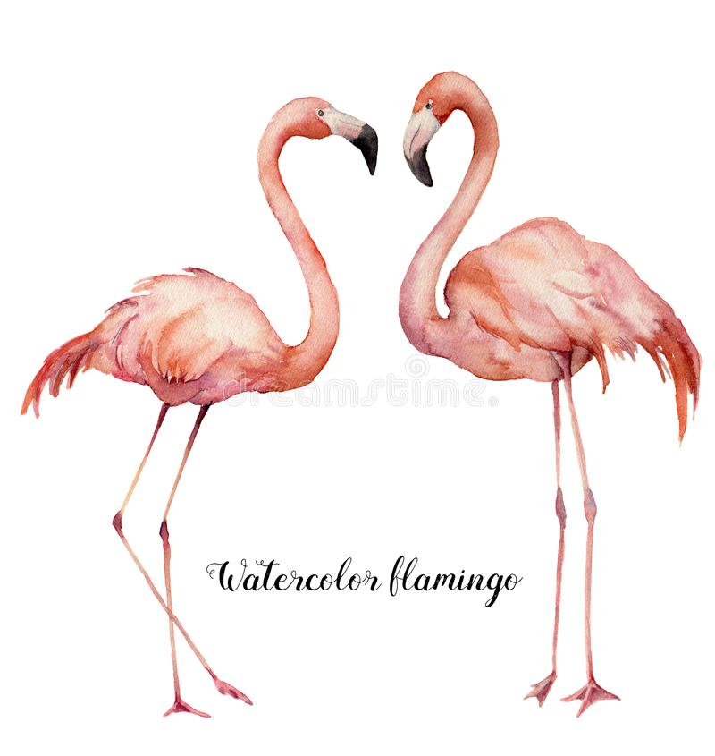 Waterverf twee het flirten geplaatste flamingo's De hand schilderde heldere exotische die vogels op witte achtergrond worden geïs vector illustratie