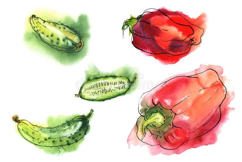 Waterverf vastgestelde groenten, peper en komkommer vector illustratie