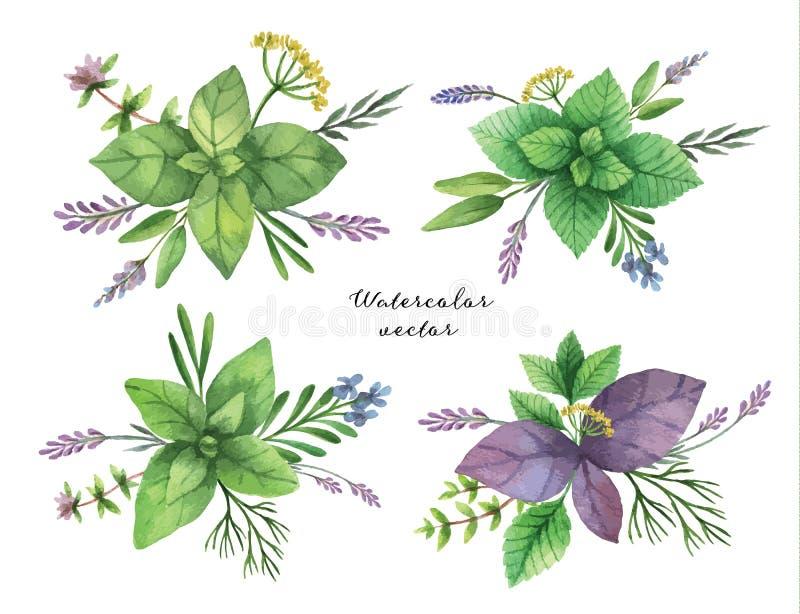 Waterverf vectorhand geschilderde reeks kruidenboeketten stock illustratie