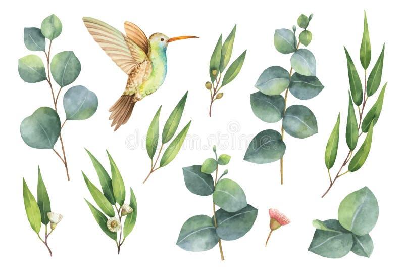 Waterverf vectorhand geschilderde reeks met eucalyptusbladeren en Kolibrie stock illustratie