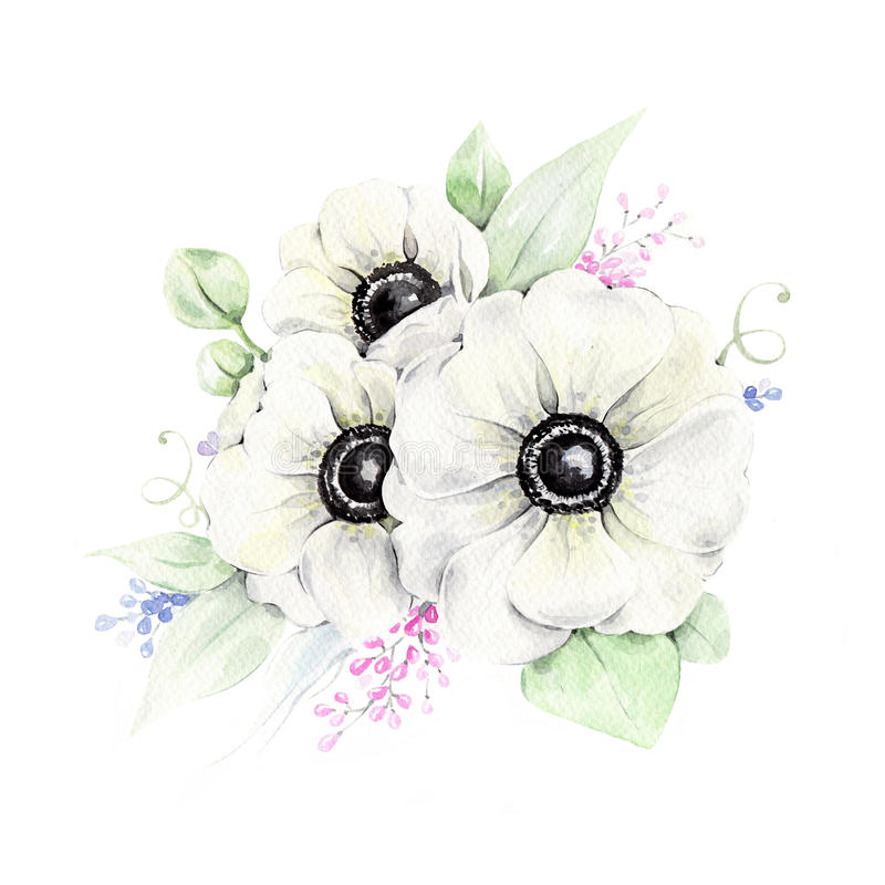 Waterverf witte anemonen stock illustratie
