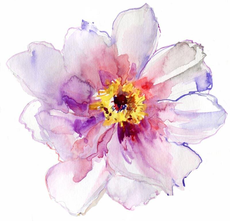 Waterverf witte bloem royalty-vrije illustratie