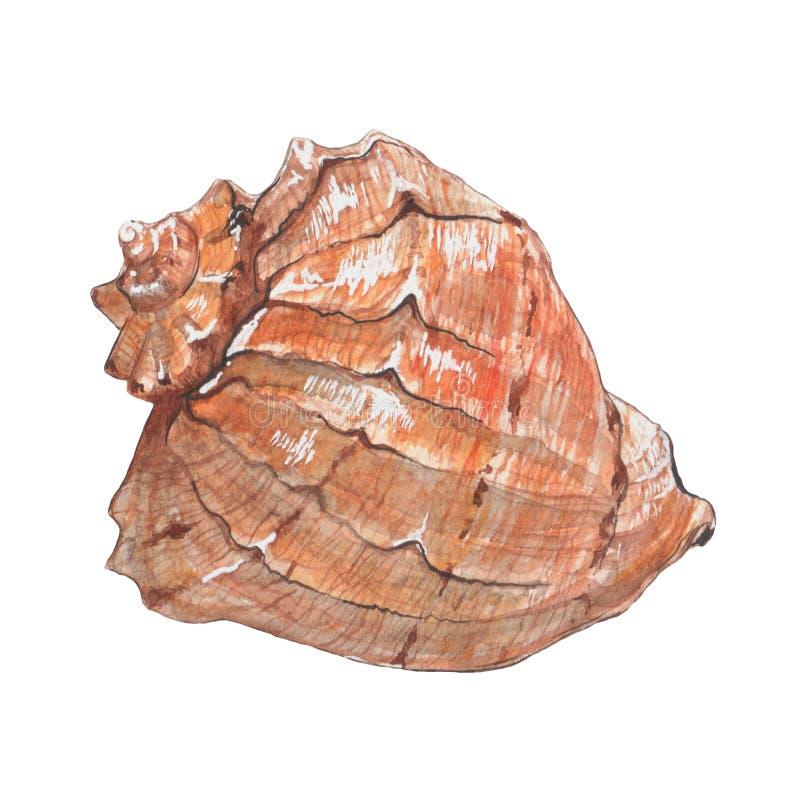 Waterverf zachte zeeschelpen stock illustratie