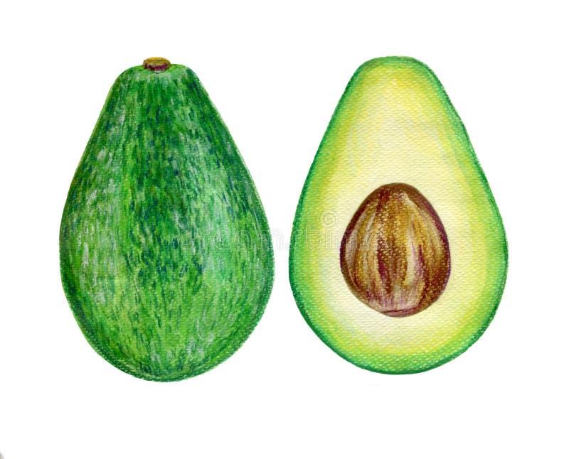 Waterverfavocado, de helft van avocado, avocadozaad vector illustratie