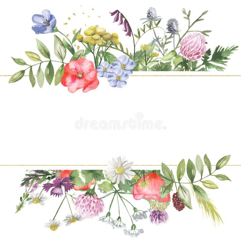 Waterverfbanner met wildflowers, kruiden, installaties, weidebloemen vector illustratie