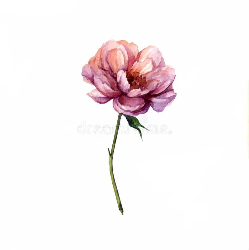 Waterverfbloem op witte achtergrond voor embleem stock illustratie
