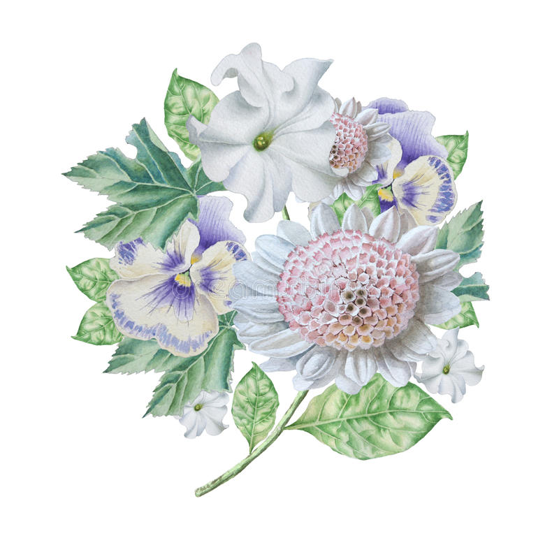 Waterverfboeket met bloemen petunia pansies royalty-vrije illustratie