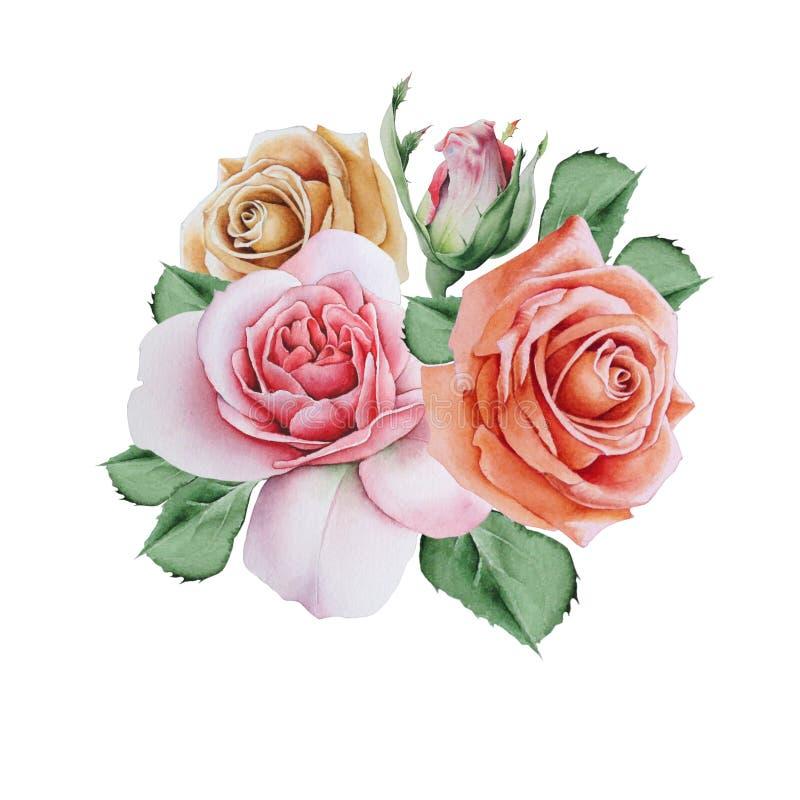 Waterverfboeket met rozen Illustratie royalty-vrije illustratie