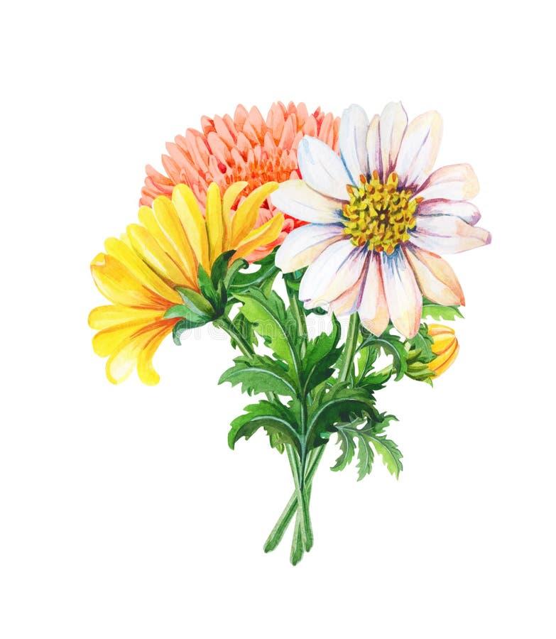 Waterverfboeket van chrysanten op een witte achtergrond De zomer, de herfst bloemenillustratie van gele bloemen vector illustratie