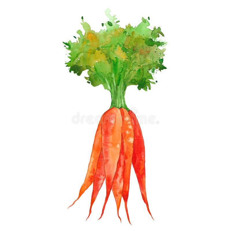 Waterverfbos van wortelen vector illustratie
