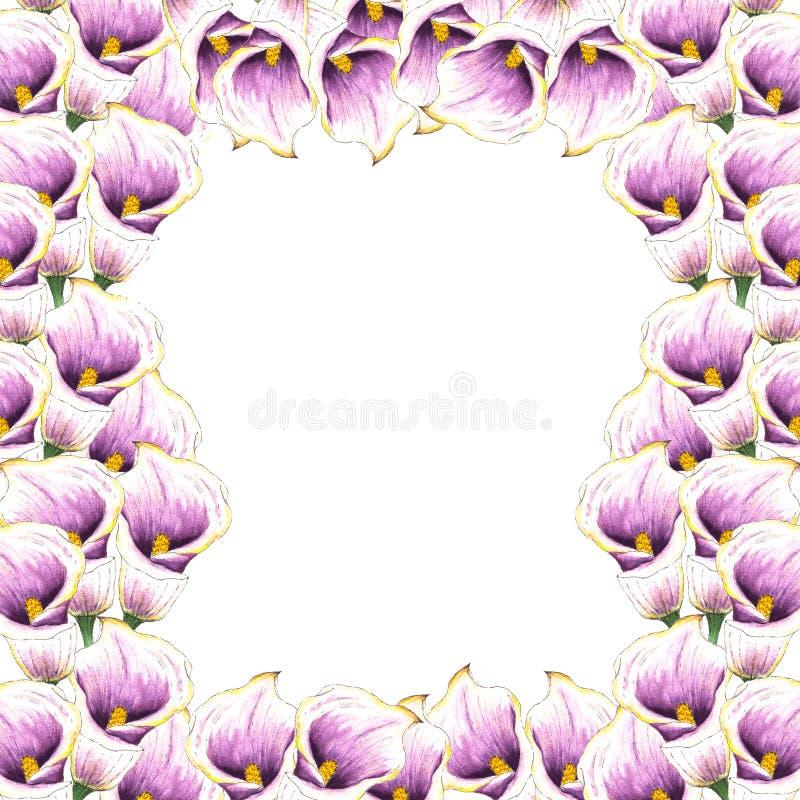 Waterverfcallas Bloemen achtergrond Het patroon van de bloem Tropische installaties Geïsoleerdj op witte achtergrond Bloemen rond royalty-vrije illustratie