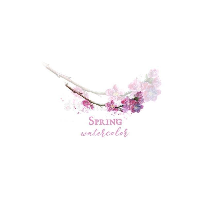 Waterverfembleem van de bloeiende tedere druk van de sakuratak en illustratie voor decor en ontwerp royalty-vrije illustratie
