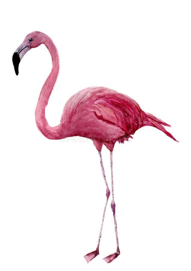 Waterverfflamingo Exotische die het waden vogelillustratie op witte achtergrond wordt geïsoleerd Voor ontwerp, drukken of achterg royalty-vrije illustratie