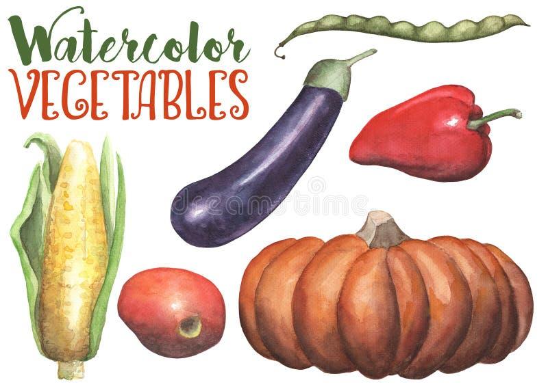 Waterverfgroenten op witte achtergrond Handdrawn geïsoleerde groenten Met de hand geschilderde pompoen, aubergine, tomaat vector illustratie