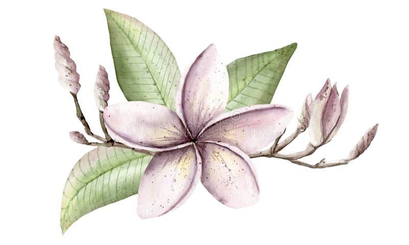 Waterverfhand geschilderde handpaint reeks voorwerpen Roze en purpl royalty-vrije illustratie