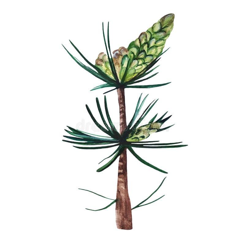 Waterverfhand geschilderde illustratie van pijnboomtak met groene kegels royalty-vrije stock fotografie