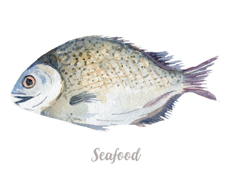 Waterverfhand getrokken vissen verse zeevruchtenillustratie op witte achtergrond vector illustratie