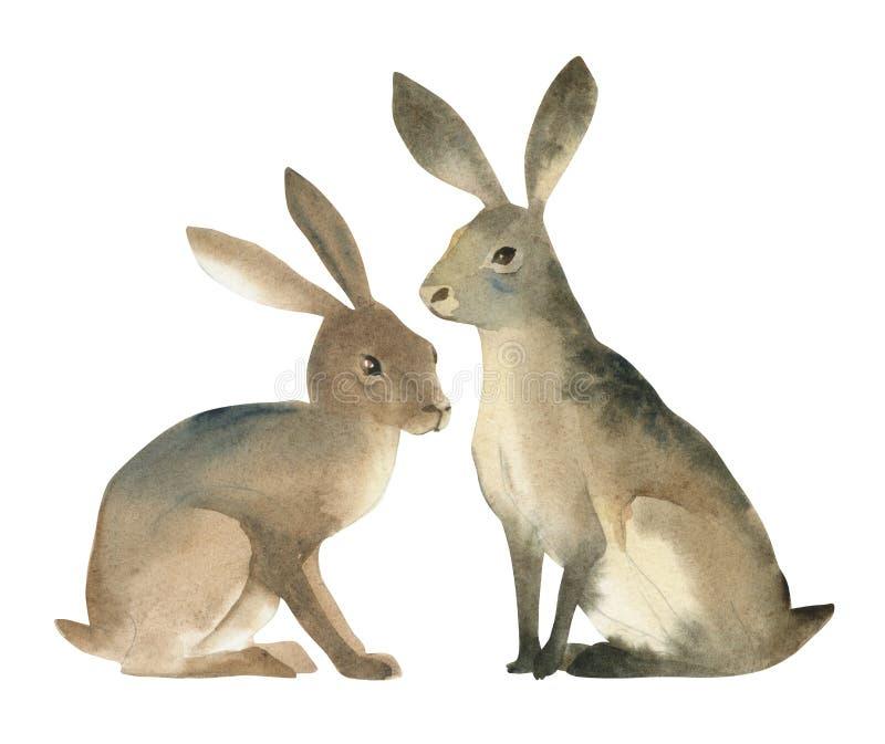 Waterverfillustartion van bruine hazen op witte achtergrond Realistische bos dierlijke schets vector illustratie
