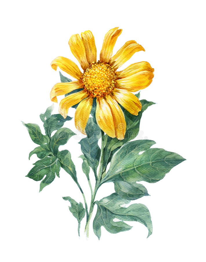 Waterverfillustratie het schilderen van Geel, bloem, zonnebloem royalty-vrije illustratie